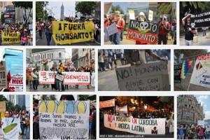 STOP GLIFOSATO – MANIFESTO NAZIONALE